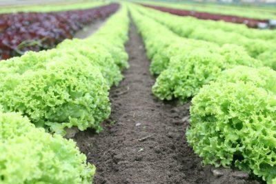 Agricultura_precision_campo_cultivos