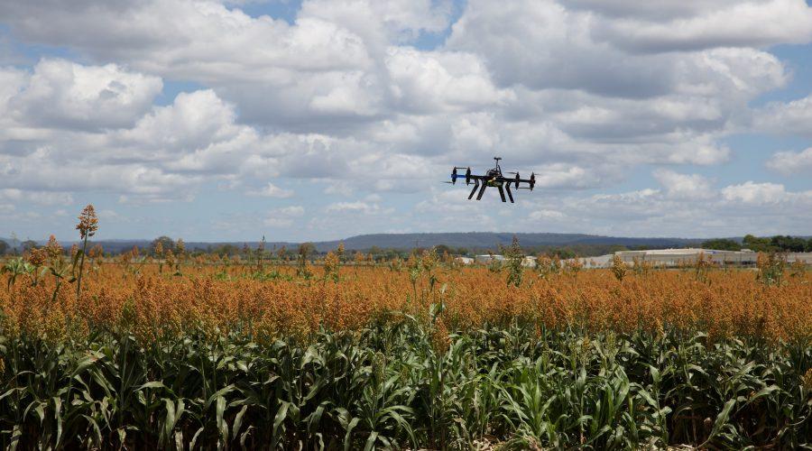 Agricultura_precision_dron_campo