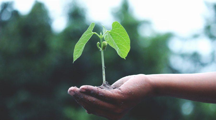 Persona_planta_agricultura