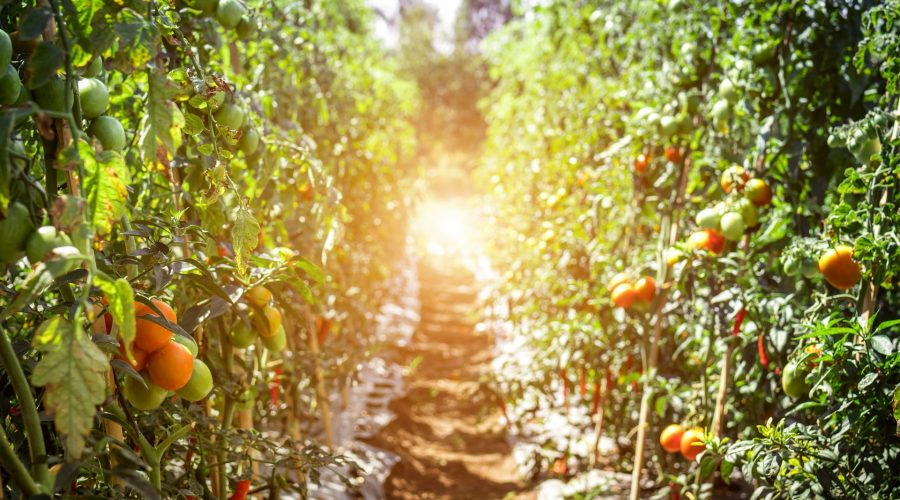 Agricultura_sol